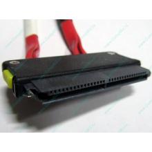 SATA-кабель для корзины HDD HP 451782-001 459190-001 для HP ML310 G5 (Ковров)